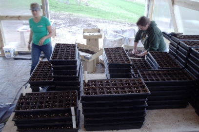 All of these seeds in all of these pots will become lots and lots of squash!