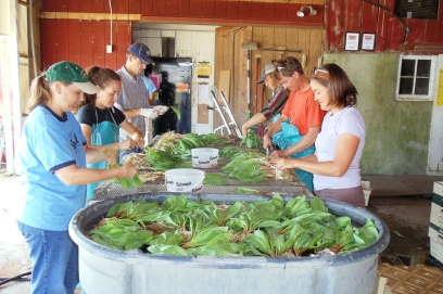 Ramp cleaning.  Then we bring them back to the packing shed to spray them clean, band them together and dip them into a big tub of water.  Yum, they will sure taste good!