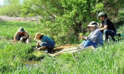 Watercress harvest in a spring-fed stream on the farm. (from left) Eric and Elisabeth, full time employees, cut the watercress while standing on a pallet so they don't sink into the mud, while Cathy and Michelle, two worker shares, band the watercress.