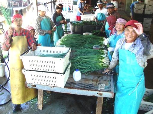The Cambodian Crew