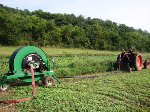 Tractor pulling out traveling gun to irrigate beets.