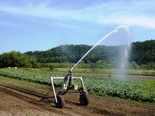 The traveling gun irrigating cabbage on Tuesday