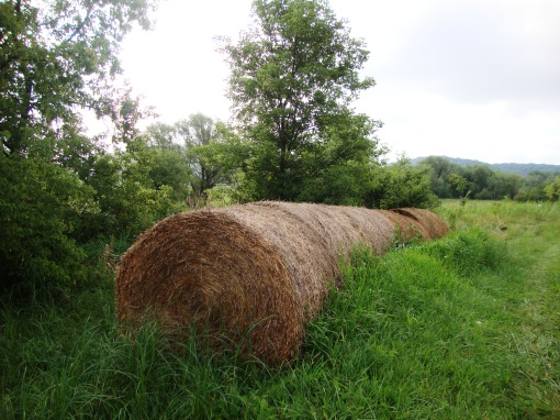 Round bales of harvested hay wait to be put onto vegetable fields as mulch.  The mulch improves the soil, suppresses weeds, and provides  a clean and dry surface for the vegetables and the harvest crew.