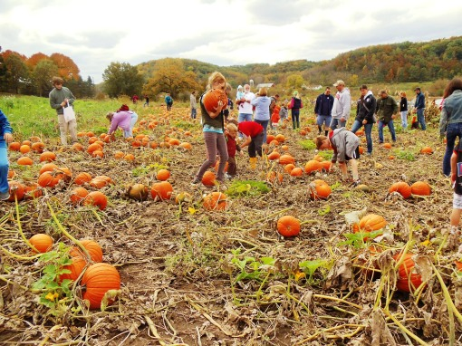 The Pumpkin Pick.  Last Sunday was a beautiful fall day and a perfect day to come out to the farm to pick pumpkins.  Thanks to all of you who came, we love to see our members having so much fun.