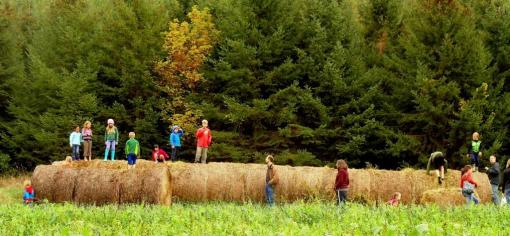 Bales of hay lined up near the pumpkin patch (to be used as much next season) became lots of fun at the Pumpkin Pick.
