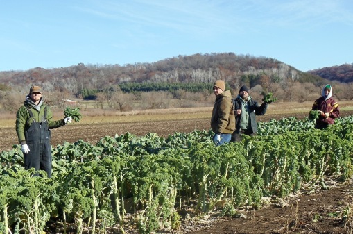 Brian, Eric,  Chris and Clara harvesting kale on Wednesday afternoon, it was a warm 28 degrees.