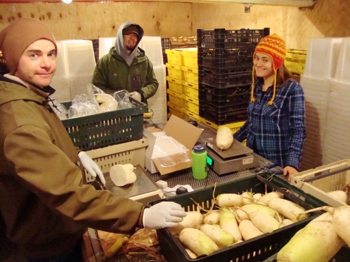 Monday was really cold in the packing shed, 23 degrees to be exact, so we set up a table in one of our walk-in coolers in order to stay warm.  We don't let the coolers drop below 32 degrees, and that feel really warm on a cold morning.  Eric, Brian and Elisabeth are bagging daikon radishes.