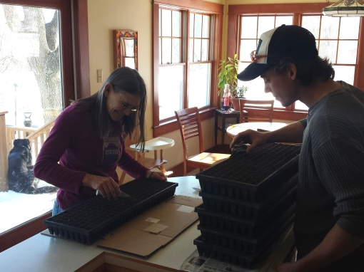 The season has officially begun.  We are planting seeds for the Spring Share at the kitchen counter.  It won't be warm enough to move into the greenhouse for a few weeks.