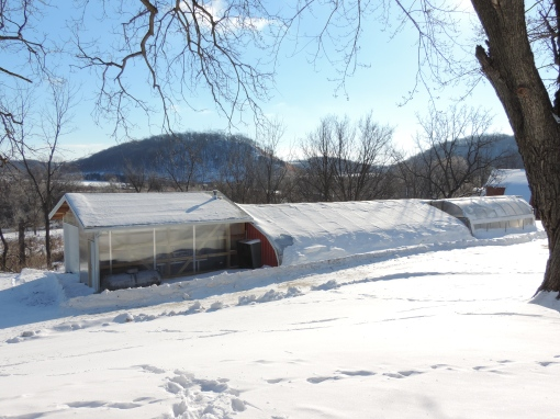 The greenhouse, buried in a winter blanket of snow, will soon be warm and cozy.  We head down there the first week of March to begin planting seeds.