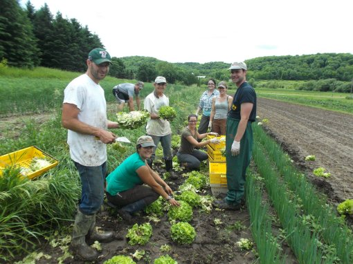 1:00; the rain has stopped and we are finishing the lettuce harvest we started in the morning. Just a little muddy! Pictured are Jesse, Barb, Becky, Jonnah and Eric Perkins. Joining the Perkins clan are Elisabeth, harvest manager/crew leader; Thomas, summer help extraordinaire; and Mary, Wednesday afternoon worker share.