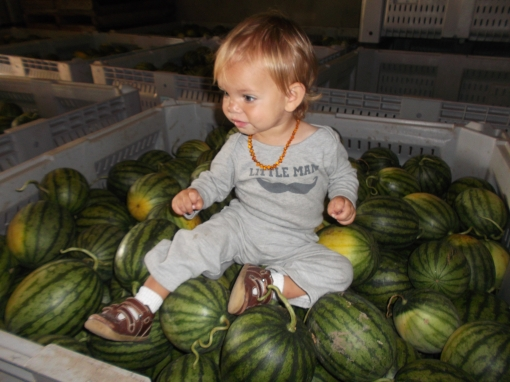 Full bulk bins of watermelon in a cooler. Posing and rather hesitant is Felix, one of the grandkids.