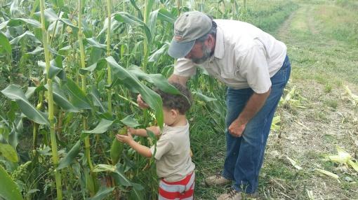 Grandpa David teaching Paavo how to harvest corn.