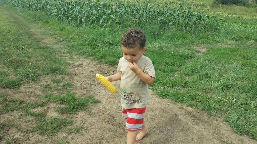 Paavo knows that the best way to eat Vermont Valley sweet corn is raw!