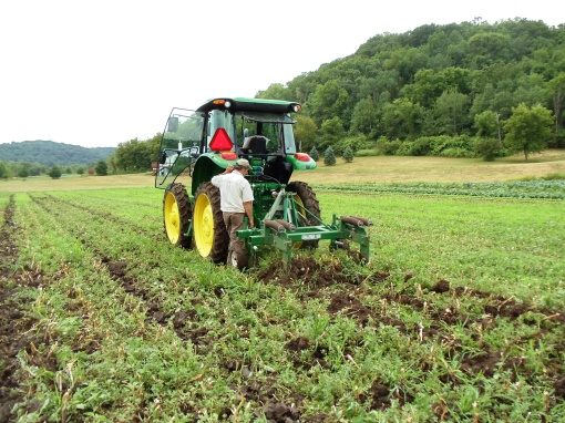 David undercutting the garlic. The tractor drags a blade beneath the soil free up the garlic. This makes it possible to easily pull the garlic from the dirt.