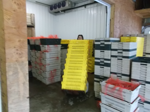 Elisabeth bringing stacks of produce out of cooler on Thursday morning.