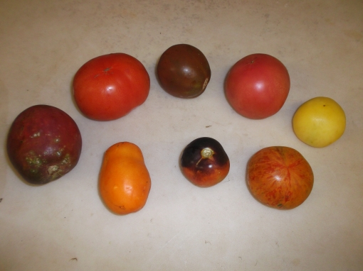 Back row (left to right): Ukrainian Purple, Ruth's, Japanese Trifele Black, Pink Beauty, Garden Peach. Front row: Orange Banana, Indigo Rose, Red Zebra.