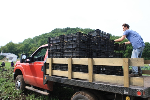 Eric loads full crates of garlic onto the truck.