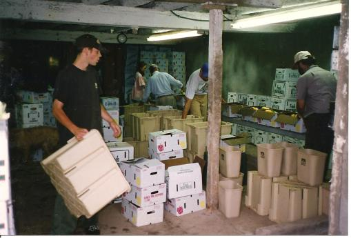 Box packing line 1995