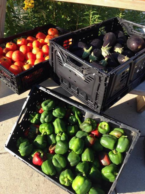 Vermont Valley tomatoes, peppers, and eggplant for the Fitz Food Pantry.