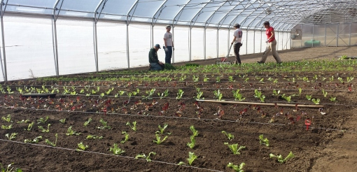 Chad, Eric, Barb and Rachel planting into the Hoophouse on March 16