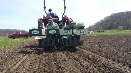 Chris (driving tractor), Chad and Rachel transplant leeks. Something to look forward to in September.
