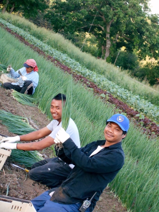 Early morning scallion harvest. Tonny and Rancy showing off their scallions.