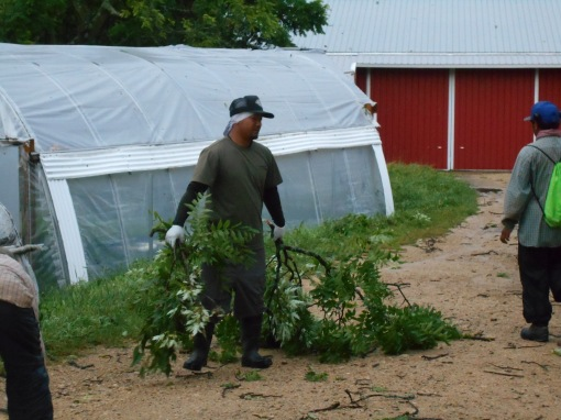 Rith clearing branches from around the packing shed and greenhouse.