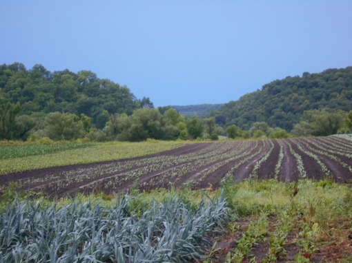 I was out in the fields shortly after 6:00 am to check for any damage and to see how wet it was.