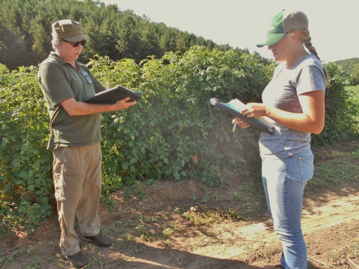 Ken (our sales rep) and Emily (the tomato and lettuce breeder) looking at their notes as they begin comparing each variety.