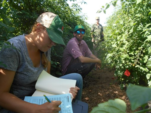 Emily taking notes while we are in the thick of the trial tomatoes. Luke (a sales rep) and Ken look on.