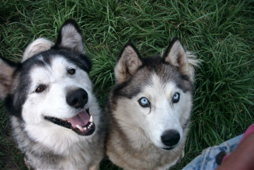 Shanna (left) and her companion Blue in 2004.