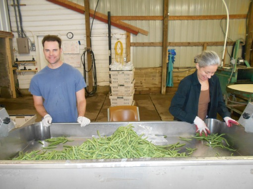 Eric and Ann bagging green beans. The beans are dumped into this table and pushed down the holes into waiting bags. Each bag is connected to a scale, so we can divide the number of pounds we deliver by the number of bags we fill.