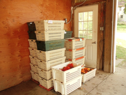 Stacks of tomatoes, peppers, and summer squash for Mt Horeb Area School District.