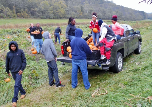 A teen group from Goodman Community Center came out on Monday to gather pumpkins. They will make lots of low income kids happy!