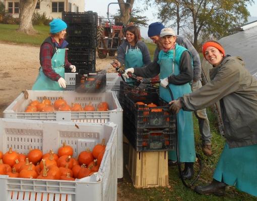 Getting those pumpkins all cleaned up for you. Becca, Rachel. J-Mo, Barb, Georgia.
