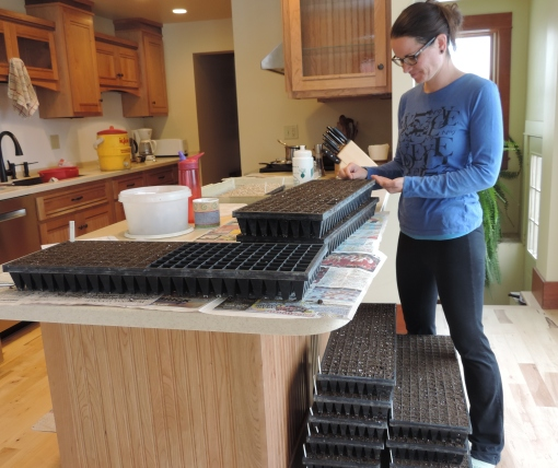 Becky Perkins (farm cook and packing shed staff) planting seeds for the Spring Share. This winter we remodeled our kitchen. The water isn't hooked up yet so it's difficult to cook but we can plant seeds on the nice new counter top. For us a kitchen is all about function!