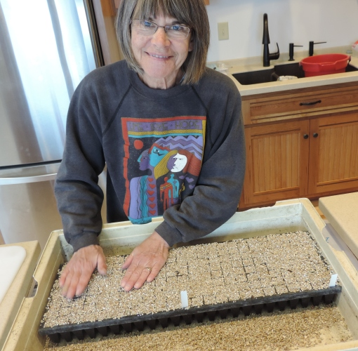 Farmer Barb Perkins putting vermiculite on top of the seeds. The vermiculite holds in the moisture and allows the seedlings to easily emerge. Under that seeding try and covered with newspaper, is a beautiful new cutting board. Can't wait to use it, oh I guess I am.
