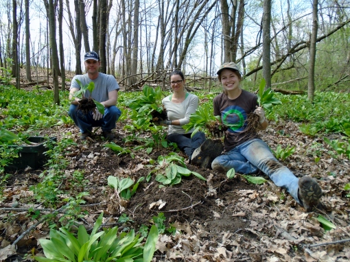 Eric, Becky and Abby showing off some freshly dug ramps. They will break apart the clumps and separate the ramps.