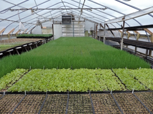 A full greenhouse.