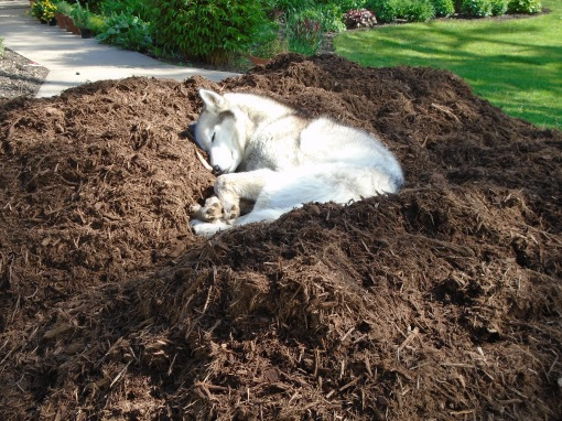 Mulch pile on driveway (or is it a dog bed?)