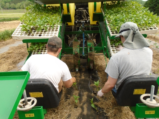 Eric and Tom riding the transplanter and laying out the pepper plants.