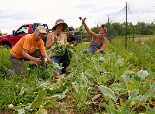 Kohlrabi harvest: Sarah (worker share), Georgia, Abby