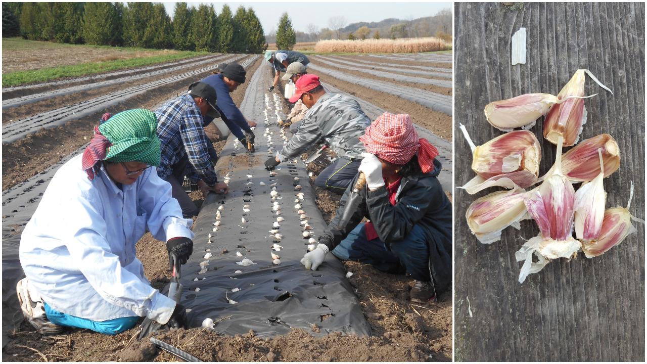 Planting Vermont Valley Community Farm