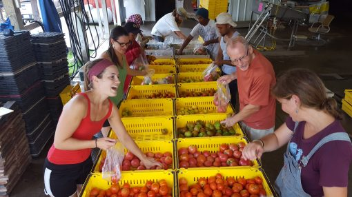 The tomato assembly line. All of the tomato varieties are put on the table; then a calculated number of each one gets put into a bag. This is a regular Wednesday afternoon task. It can only happen after all of the tomatoes are harvested, washed and counted! Over 10,000 tomatoes harvested, washed and counted this week.