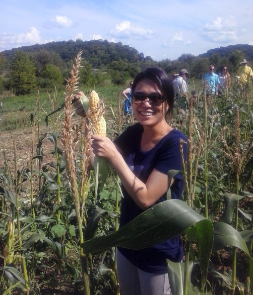 Harvesting sweet corn for the very first time!