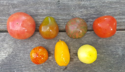 L-R Top Row: Pink Beauty, Japanese Trifele Black, Pink Boar, Marbonne L-R Bottom Row: Red Zebra, Orange Banana, Garden Peach