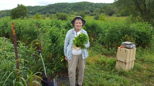 Judith has been a CSA member since 1995 - our second season! She comes out to as many farm events as she can. Here she is with basil she harvested for her marinara sauce.