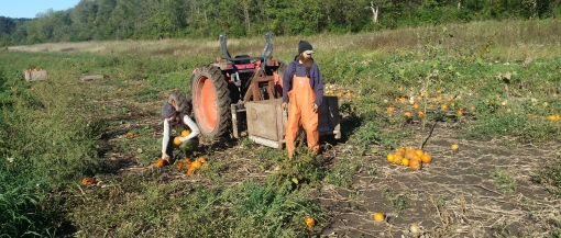 Abigail and J-Mo (Eric) harvesting pie pumkins