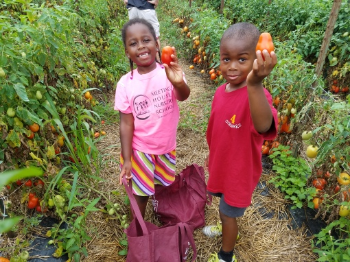 Everyone helps to fill heaping bags of tomatos!