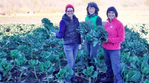 Harvesting collards. Becky Perkins, Michelle Riel (worker share), Barb Perkins